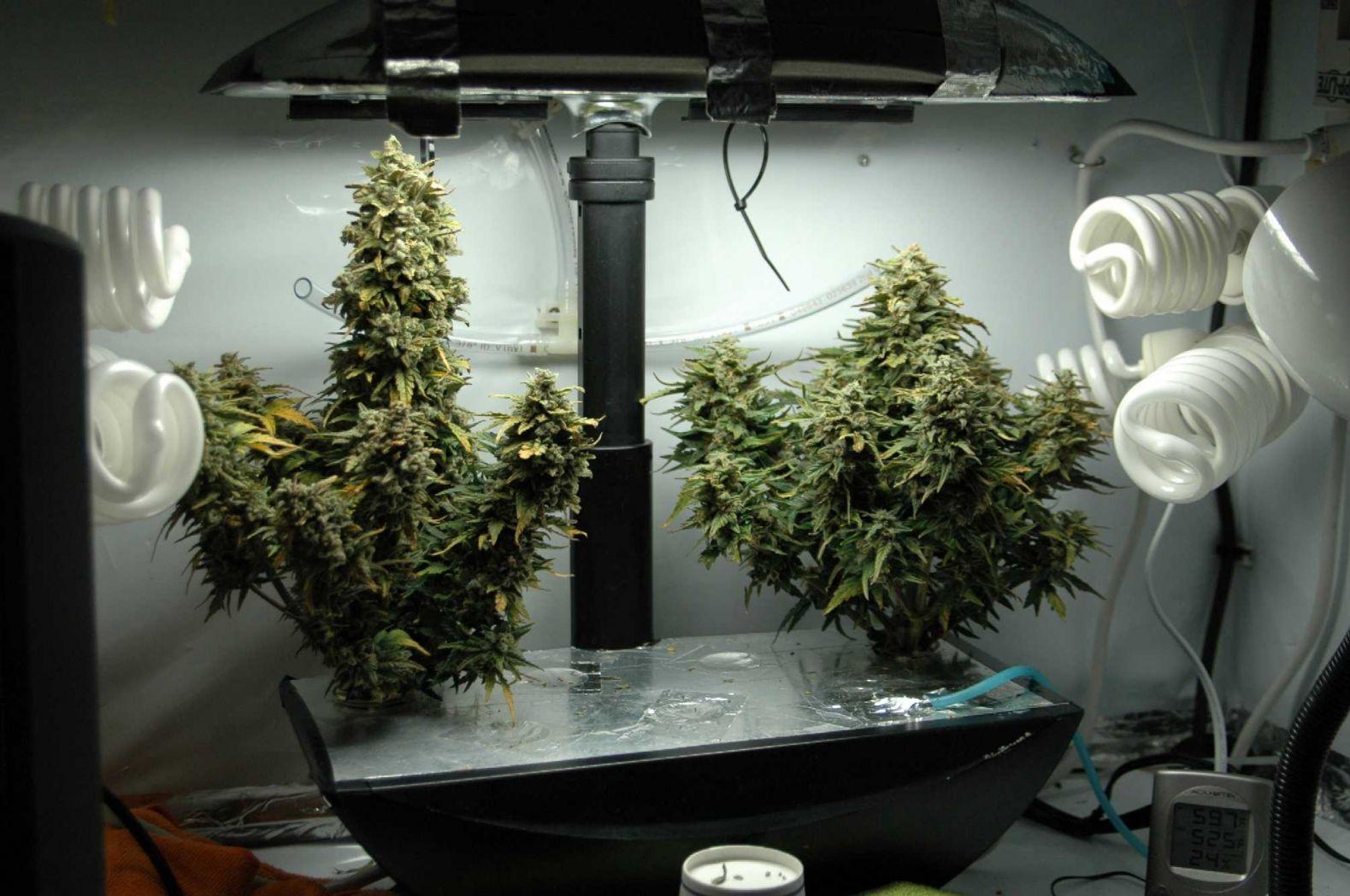 Гидропонная установка своими руками марихуаны слушать фактор 2 марихуана